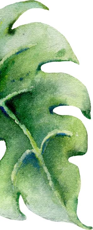 leaf gallery